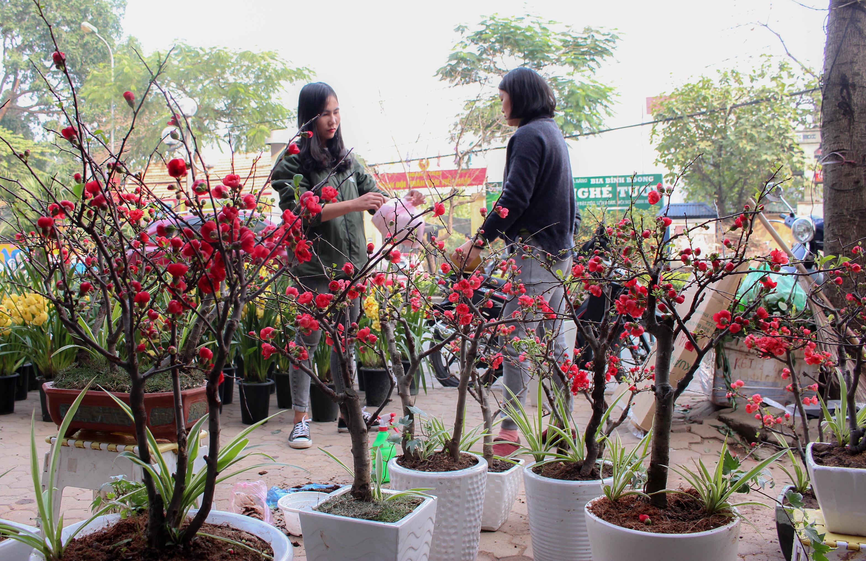 [Chùm ảnh] Nấm linh chi, hoa mai đỏ bonsai khoe sắc ngày Tết - Hình 12