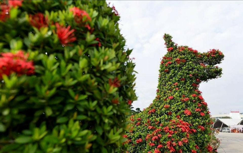 Chiêm ngưỡng cặp cây cảnh hoa mẫu đơn hình linh vật năm Mậu Tuất  - Hình 6