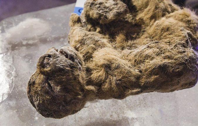 Công nghệ - Những sinh vật đã tuyệt chủng trong Công viên kỷ Jura sắp được hồi sinh? (Hình 2).
