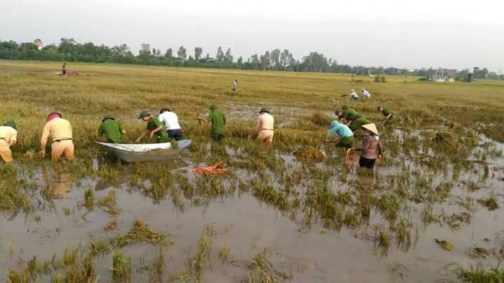 Chính trị - Xã hội - Thái Bình: Công an, quân đội gặt lúa giúp dân tránh bão (Hình 3).