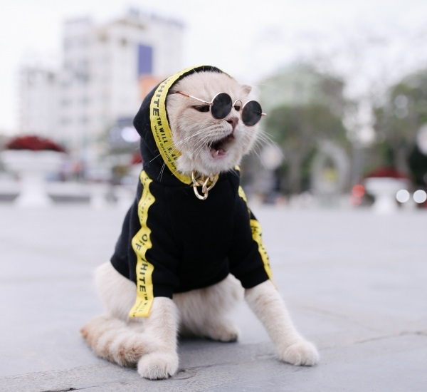 Những hình ảnh siêu dễ thương của chú mèo tên Chó nổi tiếng mạng XH - Hình 7