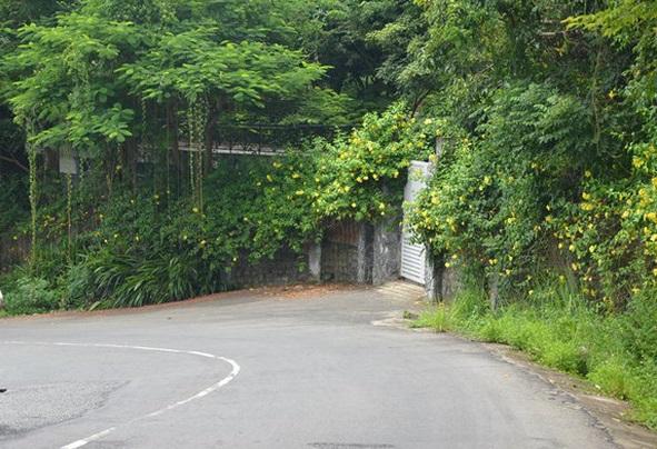 Chính trị - Xã hội - Thực hư về 137 lô biệt thự ở Sơn Trà
