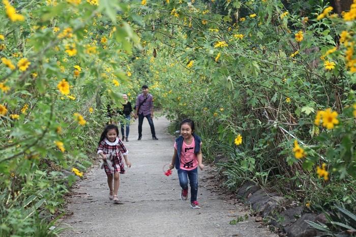 Văn hoá - Đẹp nao lòng rừng hoa dã quỳ dưới chân núi Tản (Hình 8).