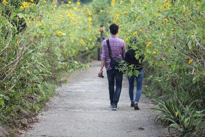 Văn hoá - Đẹp nao lòng rừng hoa dã quỳ dưới chân núi Tản (Hình 9).