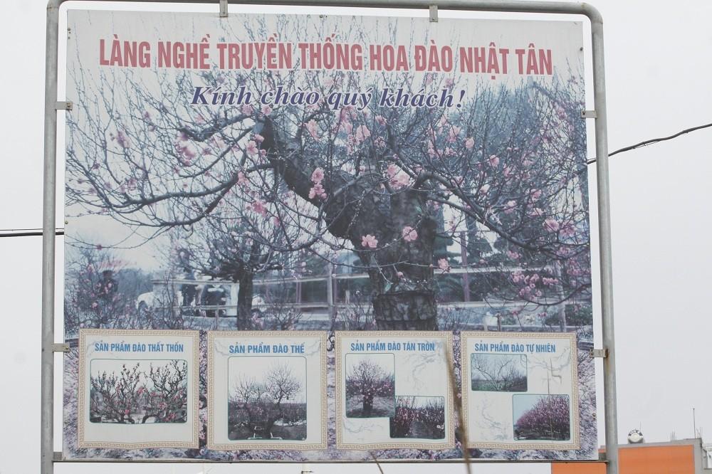 Dân trồng đào Nhật Tân: Ngóng chờ thời tiết để hoa nở đúng Tết - Hình 1