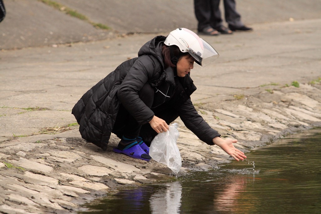 Người Hà Nội rộn ràng thả cá chép tại hồ có thiên nga - Hình 8