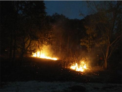 Tin nhanh - Hơn 100 người trắng đêm chữa cháy ở khu bảo tồn thiên nhiên Tà Cú (Hình 2).
