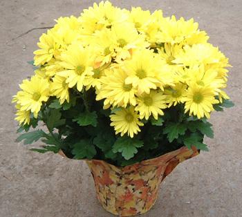 Xã hội - 7 loại hoa mang lại may mắn cho gia đình trong năm mới 2018 (Hình 3).