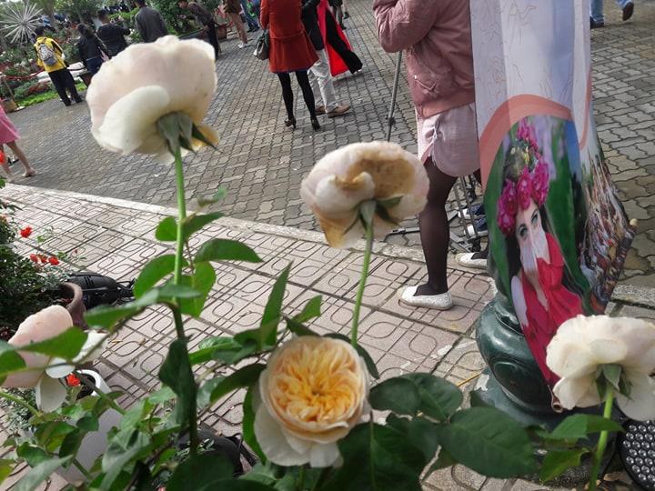 Lễ hội Hoa hồng Bulgaria vừa khai mạc đã bị chê hoa héo và nát - Hình 12