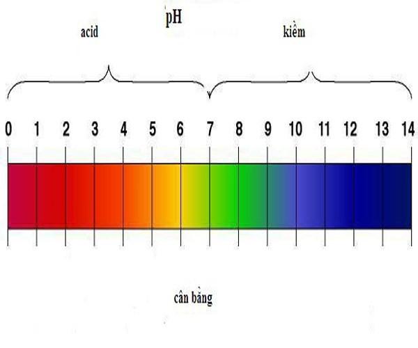 Sức khỏe - Dầu gội và tóc: Tại sao càng mượt càng rụng nhiều hơn? (Hình 3).
