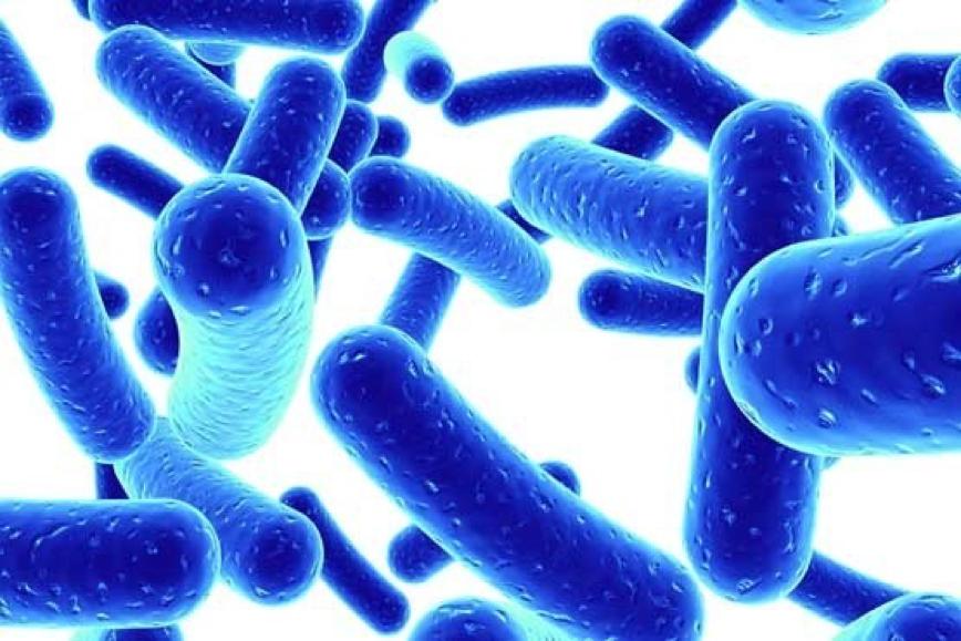"""Sức khỏe - Chuyên gia tiết lộ tác dụng """"vàng"""" của lợi khuẩn Bifido đối với bệnh viêm đại tràng"""