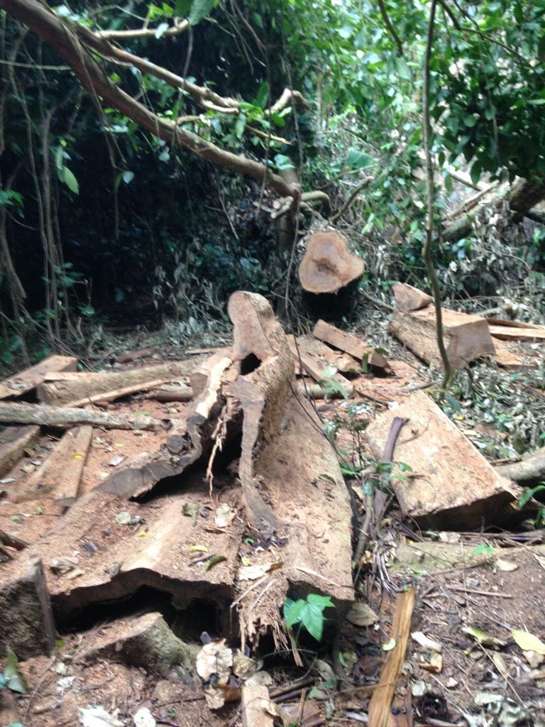 Điểm nóng - Vườn quốc gia Cúc Phương: 'Máu' rừng vẫn chảy   (Hình 2).