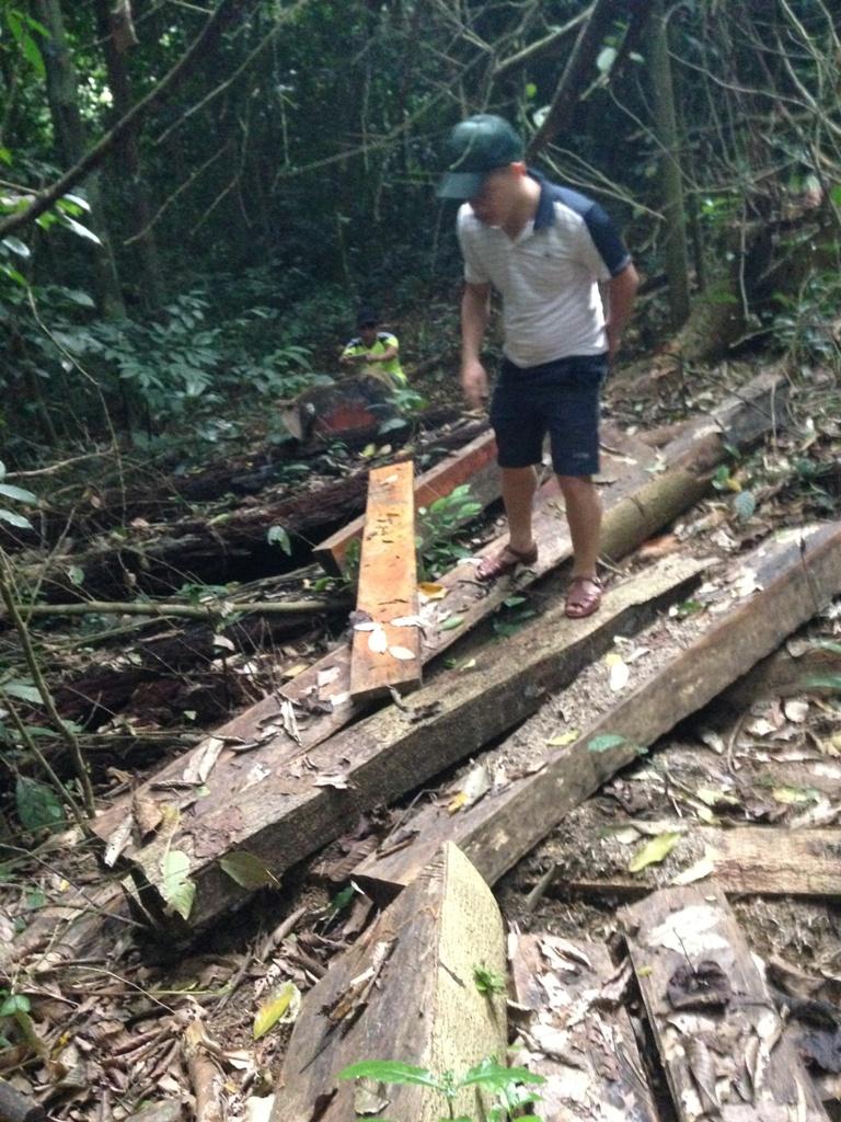 Điểm nóng - Vườn quốc gia Cúc Phương: 'Máu' rừng vẫn chảy   (Hình 4).