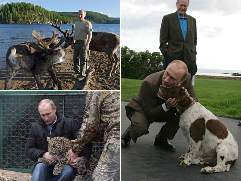 Tiêu điểm - Tiết lộ bí mật thú vị về những chú chó của Tổng thống Nga Putin (Hình 6).