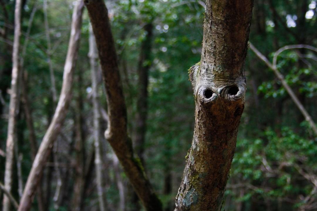Hồ sơ - Vén màn bí mật 'khu rừng tự sát' ở Nhật Bản