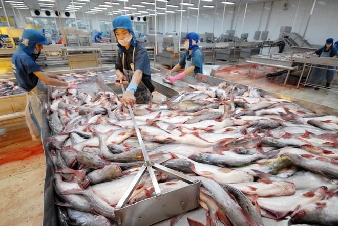 Tài chính - Ngân hàng - 'Vua cá tra' Hùng Vương tiếp tục đón nhận tin cực 'sốc'