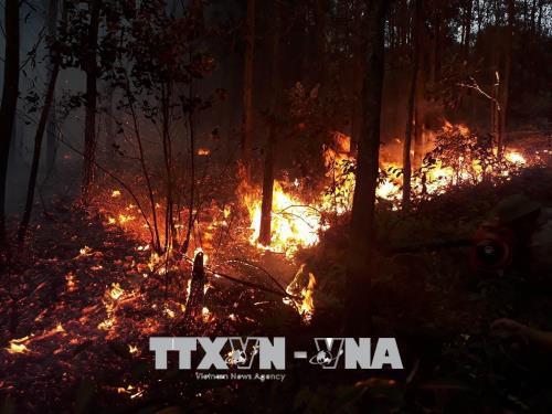Điểm nóng - Quảng Ninh: Cháy rừng thông tại Đại Yên