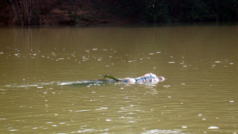 Xã hội - Phát hiện thi thể một người phụ nữ trôi dạt trên sông Thái Bình