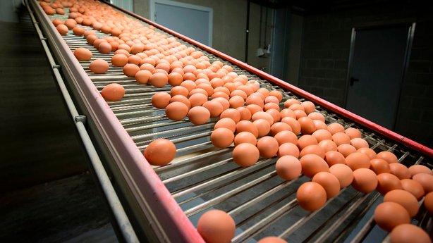 Tiêu điểm - Chấn động trứng gà nhiễm thuốc trừ sâu: Đường đi từ châu Âu sang châu Á