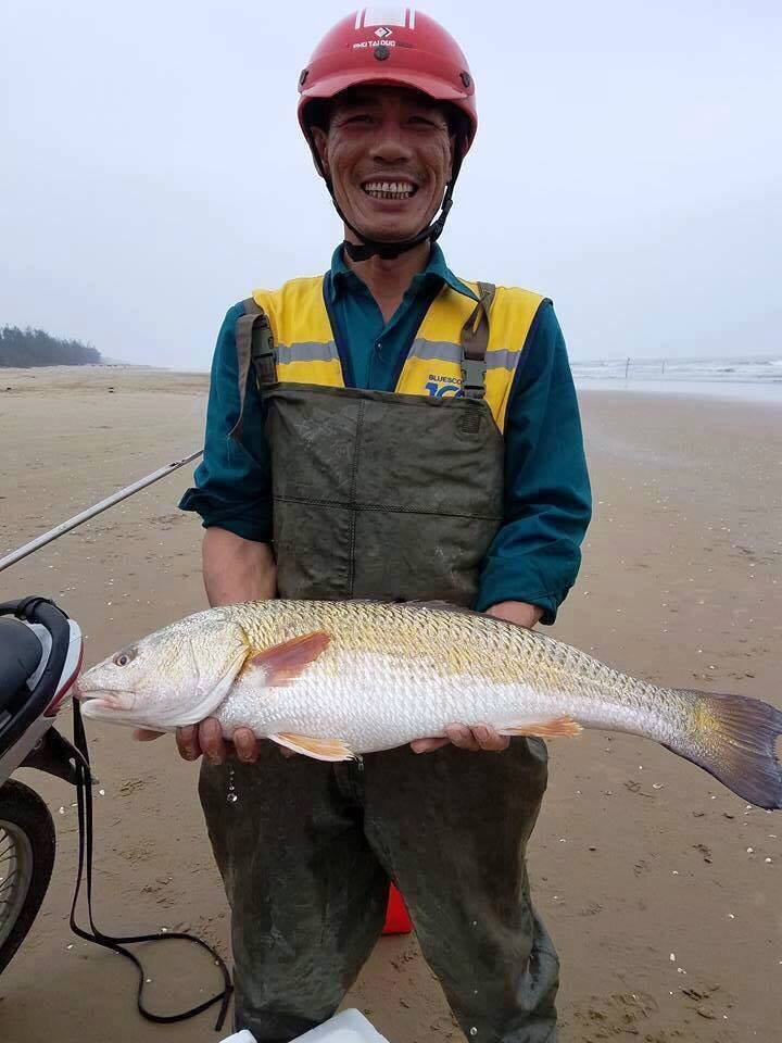Tin nhanh - Hà Tĩnh: Câu được cá sủ vàng, trả 400 triệu chưa bán (Hình 2).