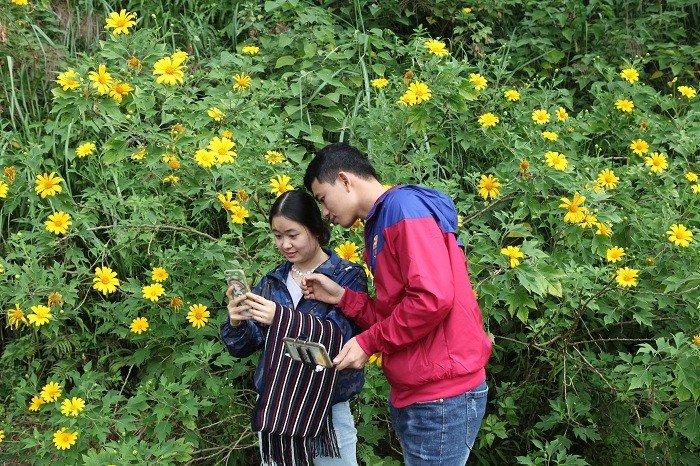 Văn hoá - Đẹp nao lòng rừng hoa dã quỳ dưới chân núi Tản (Hình 11).