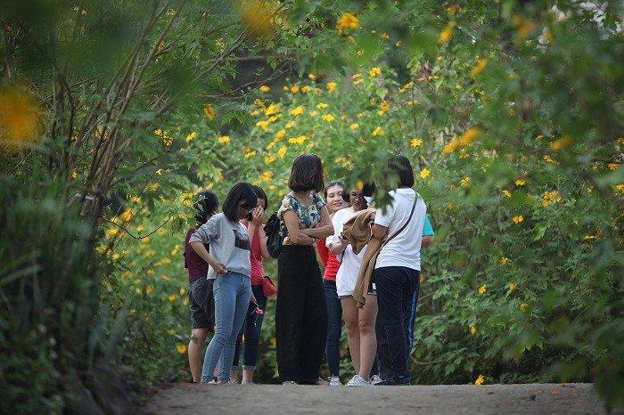 Văn hoá - Đẹp nao lòng rừng hoa dã quỳ dưới chân núi Tản (Hình 12).