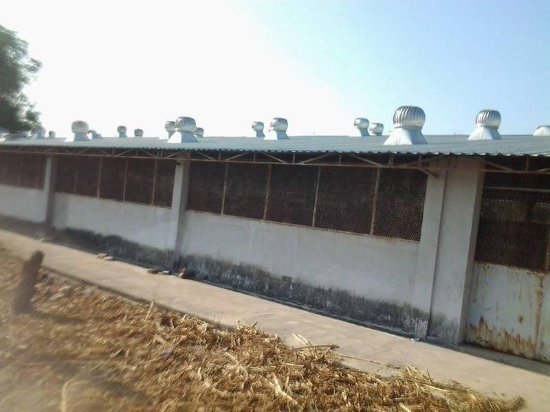 Kết nối- Chính sách - Bình Thuận: Tăng cường quản lý môi trường hoạt động chăn nuôi heo