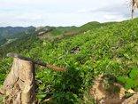 """Điểm nóng - Nghệ An: Kỷ luật gần 50 cán bộ vì để cửa rừng… """"mở"""""""