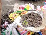 Mới- nóng - Clip: Sau vụ nổ lớn tại Bắc Ninh, vẫn có người đi nhặt vỏ đạn để... bán phế liệu