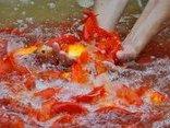 Mới- nóng - Clip: Nhộn nhịp chợ cá ông Công, ông Táo lớn nhất Hà Nội
