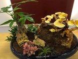 Mới- nóng - Clip: Nấm linh chi bonsai độc lạ hút khách Thủ đô dịp Tết Mậu Tuất