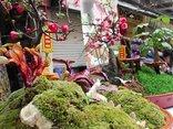 Mới- nóng - [Chùm ảnh] Nấm linh chi, hoa mai đỏ bonsai khoe sắc ngày Tết