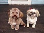 Cộng đồng mạng - Phát sốt với chú chó có khuôn mặt giống hệt người