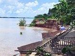 Chính trị - Xã hội - Sạt lở ở cù lao Long Phú Thuận: Di dời các hộ dân đến nơi an toàn