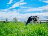 Sức khỏe - Organic – Lối sống được ưa chuộng tại châu Âu, Mỹ