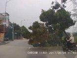 Video - Clip: Container đâm gãy cành cây, đè trúng cô gái đi đường