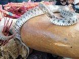 Văn hoá - Tiền cúng 'rắn thần': Dân muốn xây miếu, chính quyền gửi ngân hàng chờ xử lý