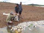 Tin nhanh - Vụ hàng chục tấn cá chết ở Kom Tum: Đề nghị thủy điện hỗ trợ 2,4 tỷ đồng
