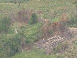 Chính trị - Xã hội - Kỷ luật 2 cán bộ quản lý lỏng lẻo để mất rừng ở Gia Lai