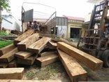 Chính trị - Xã hội - Phát hiện, thu giữ 15m³ gỗ không rõ nguồn gốc trong nhà người dân