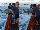 Mới- nóng - Clip: Ngư dân thả rùa biển nặng hơn 100kg về với đại dương