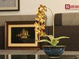 """Cộng đồng mạng - Chiêm ngưỡng quà tặng Tết độc đáo, hoa phong lan """"lá ngọc cành vàng"""""""