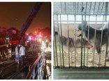 Cộng đồng mạng - Vụ cháy chung cư Carina Plaza: Chú chó thông minh cứu gia đình chủ thoát chết