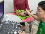 Cộng đồng mạng - Bác sĩ thú y và ca phẫu thuật cứu chú chó ung thư vào mùng 1 Tết