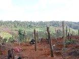 Pháp luật - Bắt giữ hai đối tượng phá rừng để làm nương rẫy