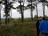An ninh - Hình sự - Phát hiện nam thanh niên chết bất thường trong rừng thông