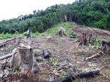 Môi trường - Không có vùng cấm xử lý phá rừng ở Nghệ An