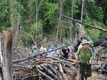 An ninh - Hình sự - Đề nghị truy tố 2 vợ chồng trong vụ phá rừng phòng hộ Tiên Lãnh