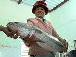 Xã hội - Ngư dân liên tiếp bắt được cá lạ nghi sủ vàng giá trăm triệu