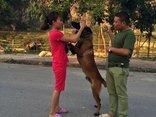 Xã hội - Cặp vợ chồng 8X Nghệ An từ bỏ công việc mở mô hình trại chó giá nghìn đô
